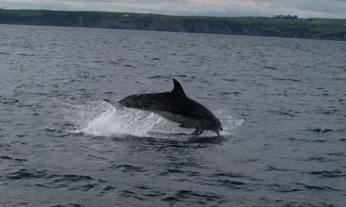 Whale Watch - West Cork