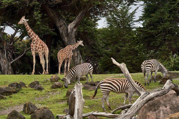 Born in 1978? You can head along to Dublin Zoo for free next weekend
