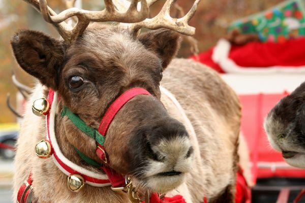 Easy, animal-friendly reindeer food recipes to make at home
