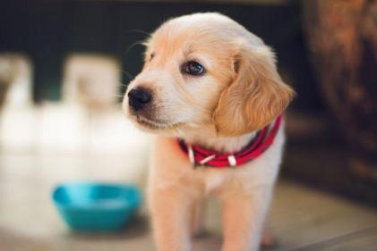 Dog owners, Aldi are releasing an affordable new pet range