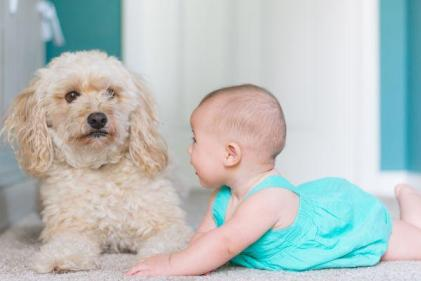 This is the reason babies arent afraid of dogs, says study