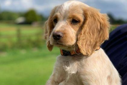 Gardaí need your help in naming their new mischievous puppy