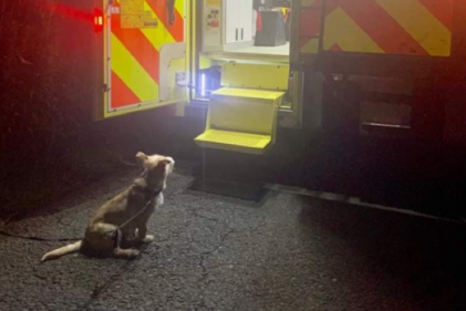 Good boy: This loyal dog guided Gardaí to his owner after a fall