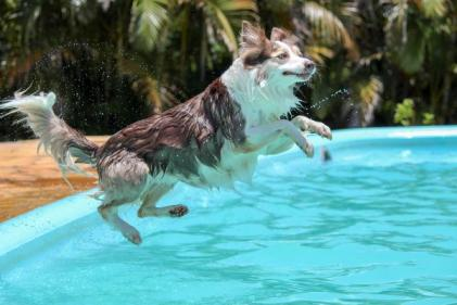 These are the best tips for keeping your pets safe in the hot weather