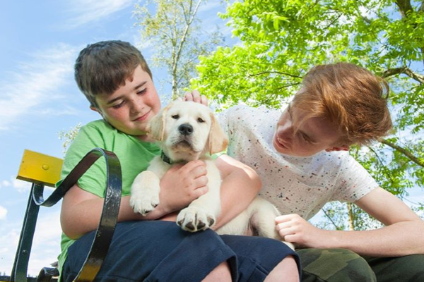 Tayto Park announce special awareness days for Irish Guide Dogs