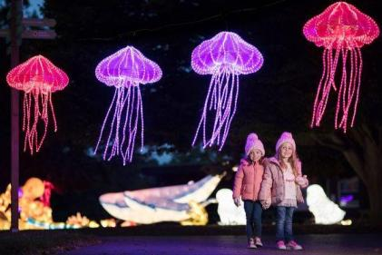 Wild Lights returns to Dublin Zoo with the most magical theme