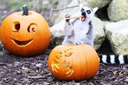 Wicked Adventures at Tayto Park opens this weekend & kids go FREE on Halloween