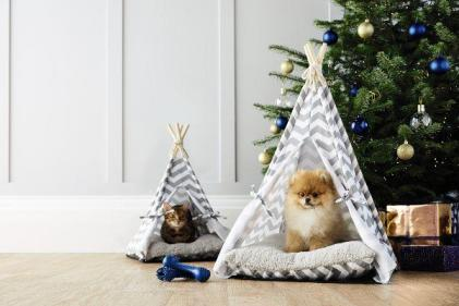 Aldi are selling tepees for cats and dogs and we NEED to buy one