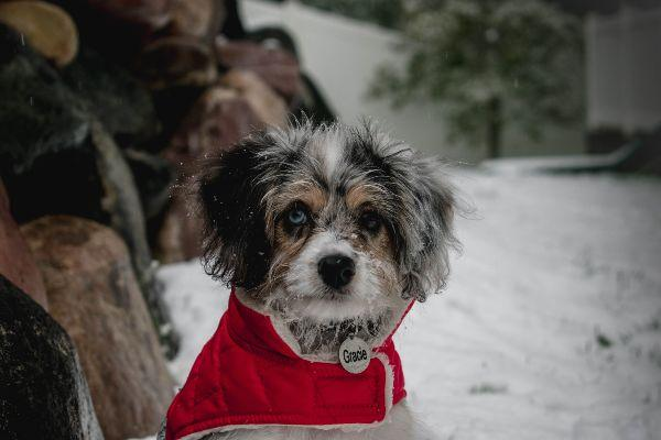 Here are 27 adorable Christmas coats for your dog
