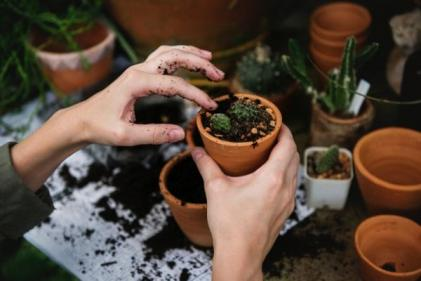 This new at-home gardening series will keep the whole family entertained