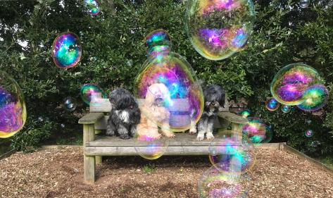 You can now buy giant eco-bubbles for your dogs