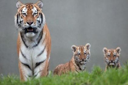 Dublin Zoo will re-open today under new health and safety protocols