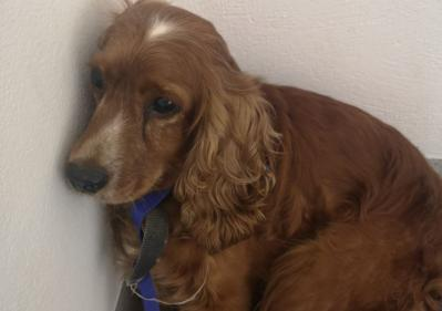 Gardaí appeals for publics help with finding owners of stolen dog