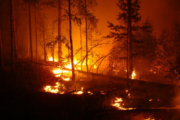 People want Gender Reveal Parties to be banned after one starts a forest-fire