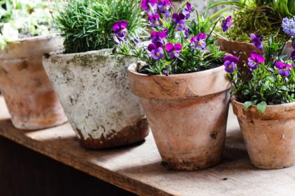 Ballyseedy Home & Garden announces end of season sale with huge discounts