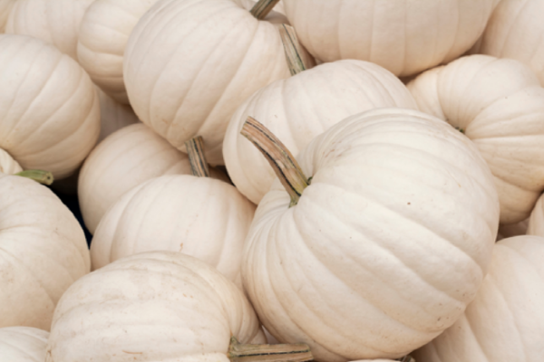 Looking for chic autumn decor? Aldi are selling white ghost pumpkins this week