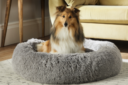 Treat your furry friends! Aldi launch mega pet collection not to be missed
