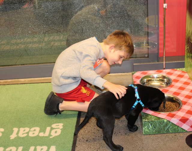 8-year-old boy living with leukaemia granted puppy wish