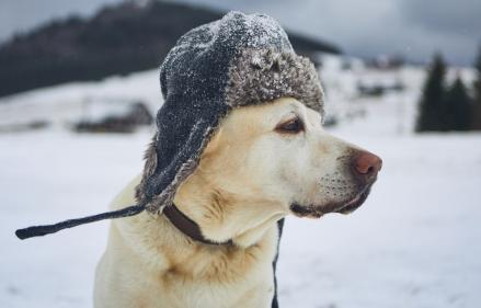 Tips & advice on looking after your pet during frost and snow