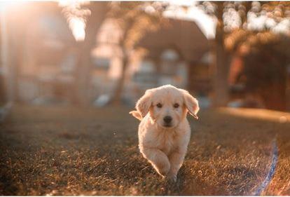 Dog Health Supplement For Healthier Weight
