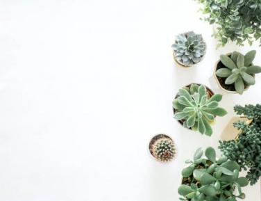 How your house plants could reduce anxiety and improve creativity