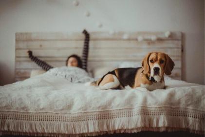 Study shows doggos lie awake at night pondering their problems
