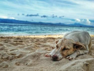 Pet safety: Helping your pup to handle the heat