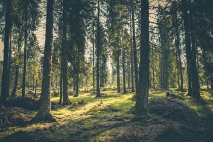 Coilltes top five forest parks to visit tis summer (and how to get the most out of them)