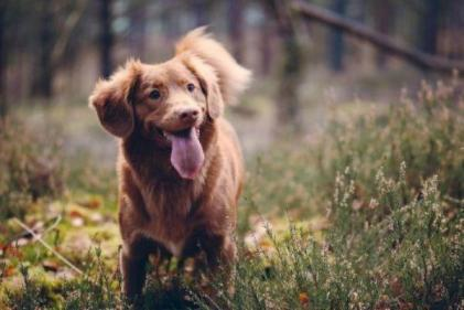 Celebrate World Dog Day with Aldi's new pet accessories range