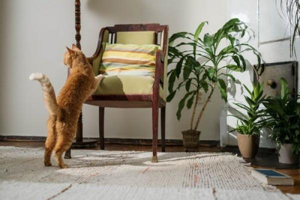 Can you mix plants and pets? With these four air-purifying non-toxic plants, you can!