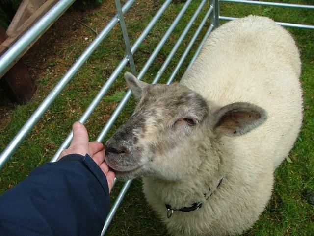 Wooly Wards Farm