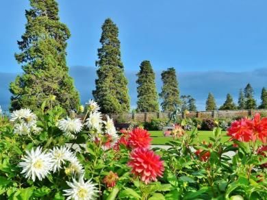 Free Garden Design Consultation with Tim Austen