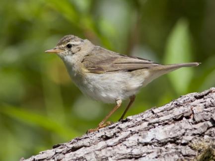 Bird Watching: Getting Started