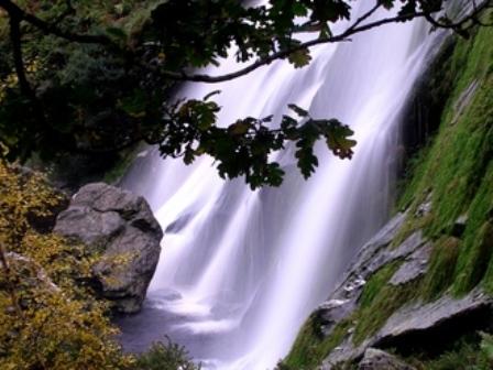 The Selfish Giant at Powerscourt Waterfall