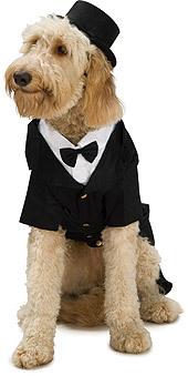 Dog Tux Costume