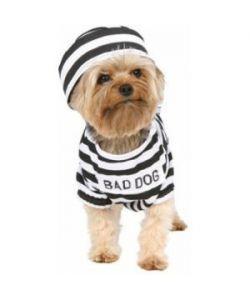 Bad Dog Costume