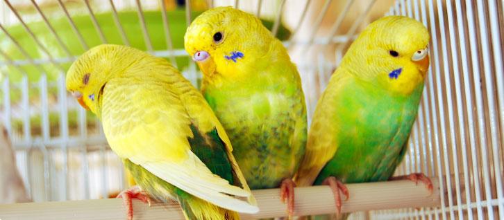 Top 10 pet birds for kids