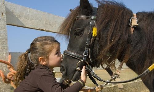 Woodlands Equestrian Centre