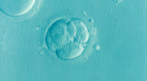 A goodbye to the ones Ill never meet: The emotions of freezing your embryos