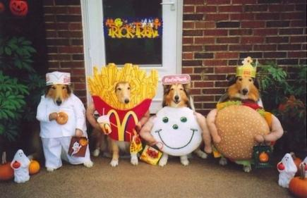 Mums best friend! 10 Halloween costume ideas for your dog