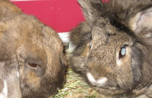 5 Signs Your Rabbit Is Blind And How To Keep Them Safe